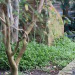 Botanischer-Garten-103
