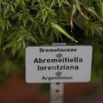 Botanischer-Garten-117