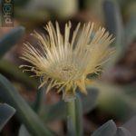 Botanischer-Garten-124