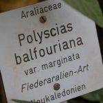 Botanischer-Garten-13