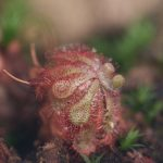 Botanischer-Garten-139
