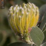 Botanischer-Garten-145