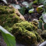 Botanischer-Garten-175