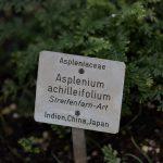 Botanischer-Garten-178