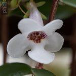 Botanischer-Garten-21