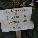 Botanischer-Garten-22