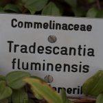 Botanischer-Garten-25
