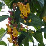 Botanischer-Garten-37