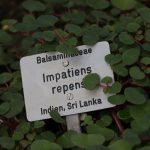 Botanischer-Garten-4