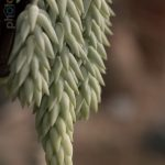 Botanischer-Garten-65