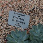 Botanischer-Garten-70