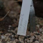 Botanischer-Garten-73
