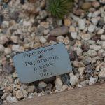 Botanischer-Garten-74
