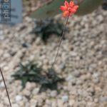 Botanischer-Garten-78