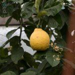 Botanischer-Garten-91