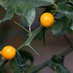 Botanischer-Garten-95
